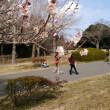 今日は昭和の森公園で散歩