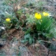 春よ・・・