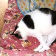 嫌われ猫の寝姿