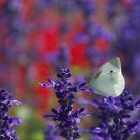 蝶よ 花よと・・・
