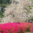2018.04.10 新宿御苑: 八重桜とツツジの紅白模様