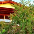 『秋の七草』 旧吉田茂邸