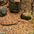 今日の風で散らされた満天星の葉。荒れ模様は、この後夜も続くとのことです。