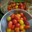 トマトのひび割れ