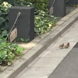 オスズメ見なくね?27 we haven't seen many sparrows