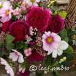 季節の花 コスモス