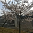春満喫! どこも桜が満開でした