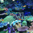 水族館と忘年会