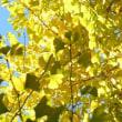 Yellow Yellow Happy (ポケットビスケッツ)