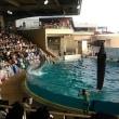 江ノ島水族館、楽しかった。