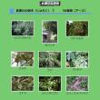武庫川の樹木2