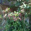 庭にも 春が