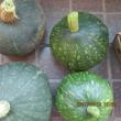 秋から冬の野菜の種まき。