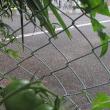 トマトサラダ & なす焼き スタンバイ OK (其の七)   <゜)))彡 № 70