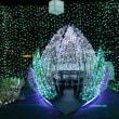時之栖イルミネーション (静岡県御殿場市) 光のトンネルが日本一の長さ