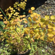 季節外れの花とガレージ塗装