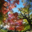 紅葉情報:岡山後楽園11月15日