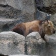 多摩動物公園のゴールデンターキン ムツ君♂は生まれて、236日目。2017.9.5