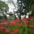 常楽寺の境内(彼岸花)