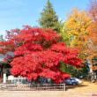 信州・長野 松代の象山神社の紅葉もいいですヨ………‼