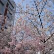 桜 2018 vol 1