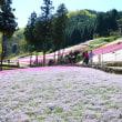 芝桜の小道・開花状況