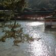 光にたたずむ社殿 ~宮島・厳島神社~
