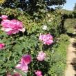 秋だ、東武トレジャーガーデンに行こう!(その3)薔薇に癒されよう!