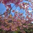 名鉄電車と桜