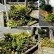 春の花壇の記録3月〜4月