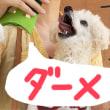 コーヒー無料ですと⁈朝マック犬 今日もマックへゴー!