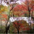 四王寺山、低山では最後の紅葉