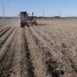 大豆の収獲作業が続いています。