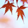 秋色ものがたり(Ⅲ)