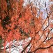 秋の写真…