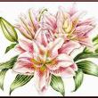 色鉛筆画438 (八重咲きの百合)