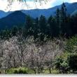 冬桜の季節Ⅵ
