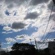 【早朝のお散歩】 18/5/19 お散歩から帰って、花ガラ摘みの作業