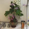 我が家の季節の花達
