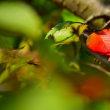 もうすぐ紅葉の季節