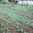 2017年10月15日 今日は、雨で畑作業はお休みです。