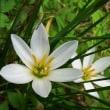 国道わきの白い花・青い花