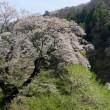 富士見台でお花見