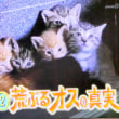 猫好きのみなさんへ・・・今晩の7時30分・・・「ダーウインが来た」は・・・「ネコ大特集」続編です