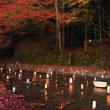 貴船、鞍馬 巨木の森で絶景紅葉とライトアップを堪能 2017-Nov-15th