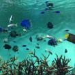 初めての水族館🐠