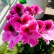 りんたろうの花