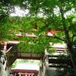 清水寺 セイスイジの紫陽花 H-3- 6-17