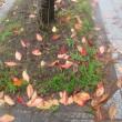 ぬれ落ち葉