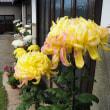 菊屋敷の休日